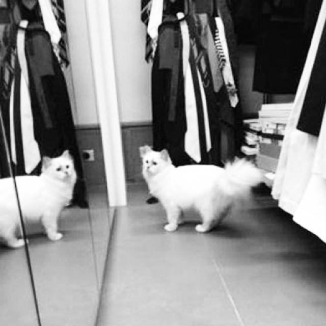 Dzień z życia Choupette Lagerfeld