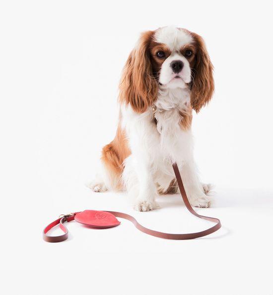 Massimo Dutti wprowadziło linię akcesoriów dla psiarzy...