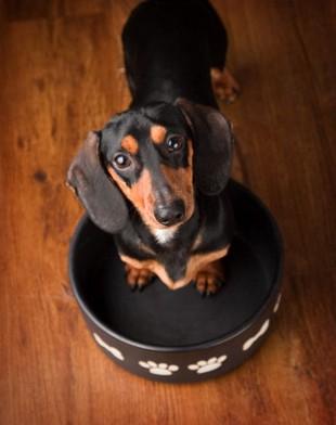 Psy do adopcji to wdzięczni modele (FOTO)