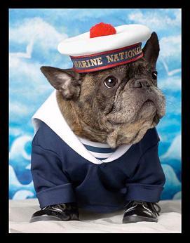 Piesek Francois Narsa gwiazdą kampanii reklamowej
