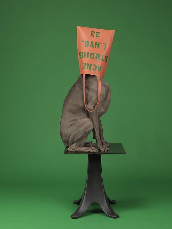W nowej kampanii Acne zamiast modelek wystąpiły psy