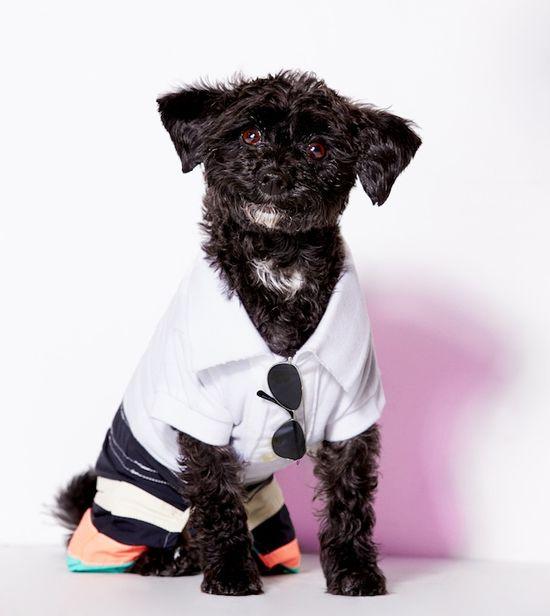 Gratka dla psiarzy - pasujące zestawy ubrań... (FOTO)