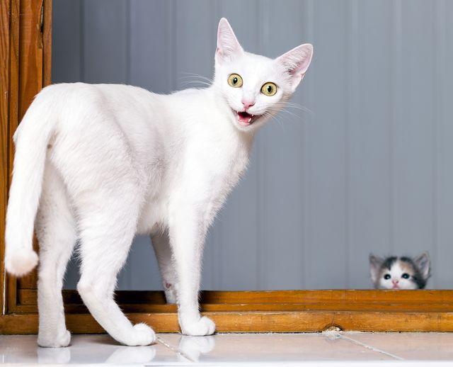 Świat zwariował? Zobaczcie... tipsy dla kotów! (FOTO)