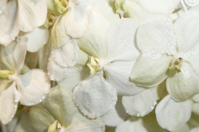 Anna Wendzikowska ponownie zachwyca w kreacji z kwiatów