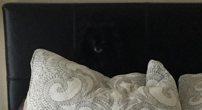 Tak, na tym zdjeciu jest pies... Znajdziecie go? (FOTO)