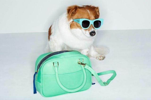 Dla fanów psiaków - nowa kampania Shopbop (FOTO)