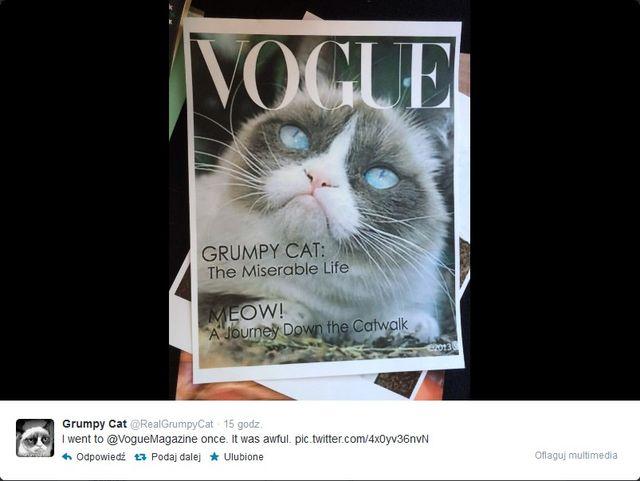 Grumpy Cat gwiazdą kolejnej okładki Vogue?