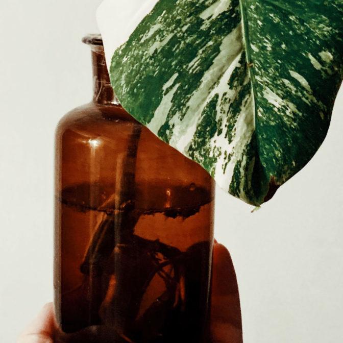Macerat z żywokostu: naturalny sposób na demakijaż